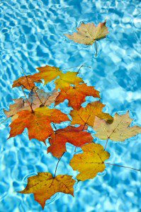 16419294 - fall leaves floating in swimming pool water